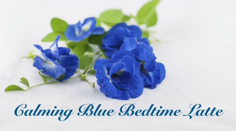 bunch of blue butterfly pea flowers calming blue bedtime latte recipe
